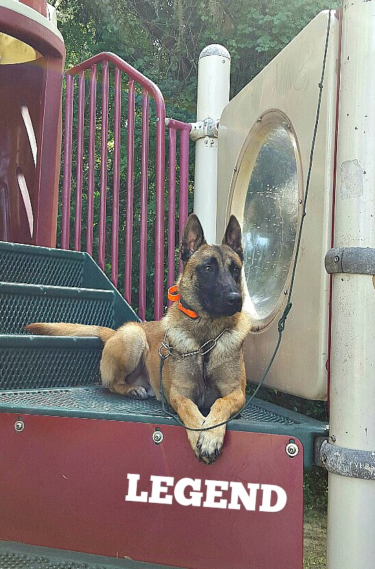 malinois website